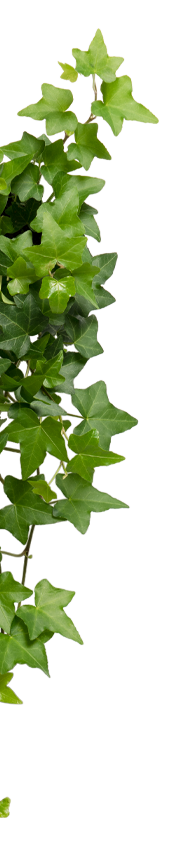 leaf bg left