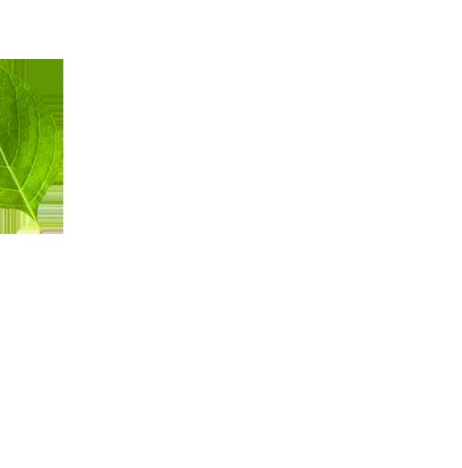 leaf left image