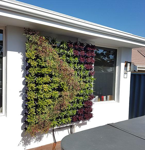 residential vertical garden after completion