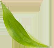 A folded green leaf pointing downward.