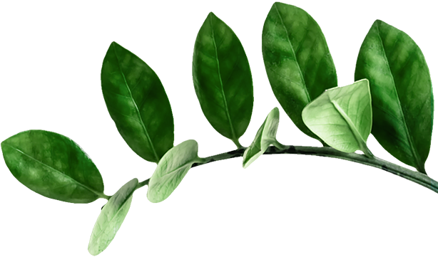 A plant branch with healthy green leaves growing from it