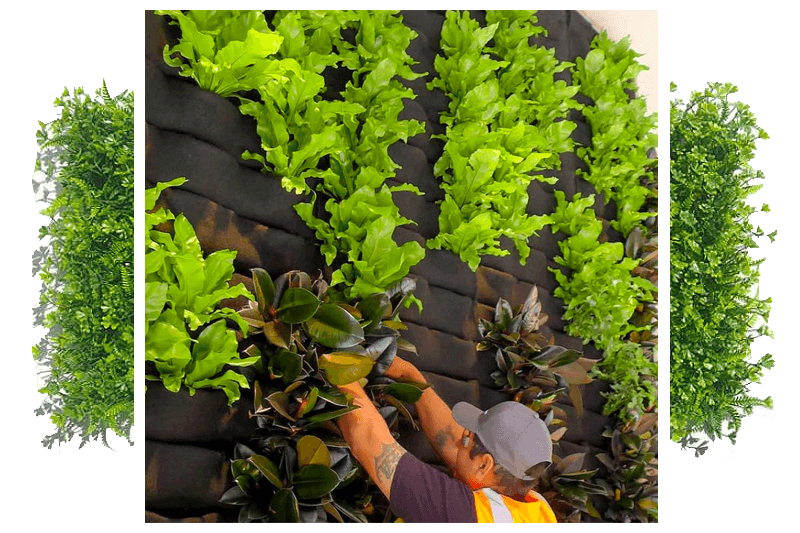 Planting a vertical garden designed by Alessio's Gardens.