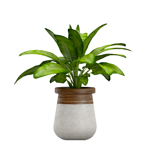 A potted plant that could be used in a landscaping project.