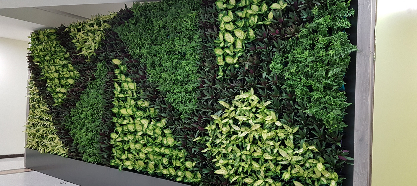 Completed vertical garden by Alessio's Gardens in the Perth CBD.