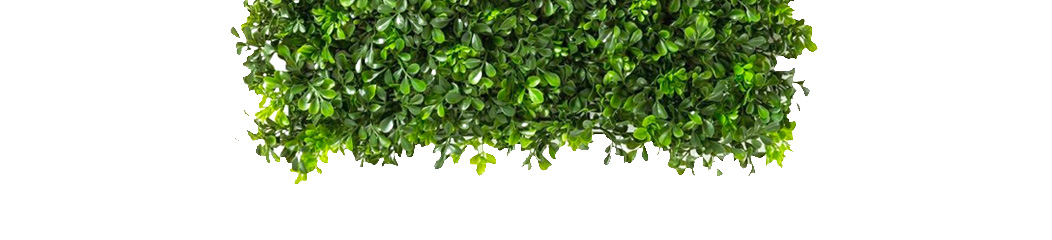 A hedge coming from the top of the page.