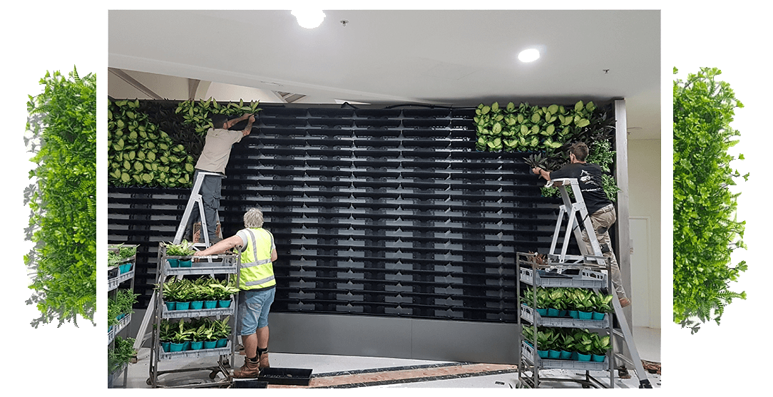 A vertical garden constructed in Morley Western Australia by Alessio's Gardens.