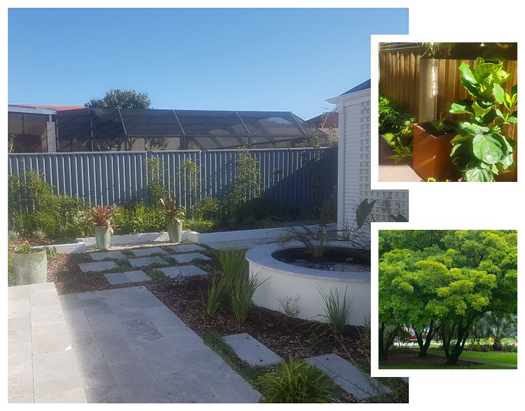 A Garden in North Perth designed and landscaped by Alessios Gardens.