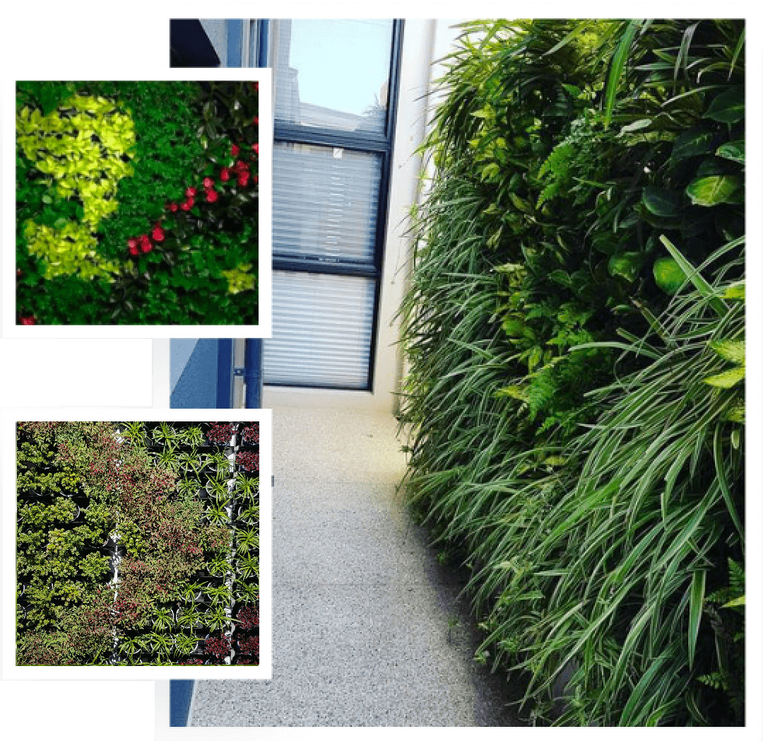 A vertical garden in Palmyra designed and built by Alessio's Gardens.