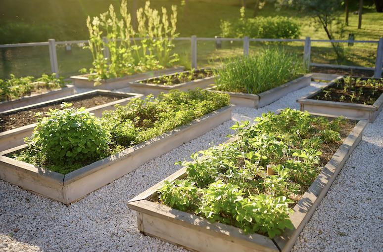Australian vegetable garden.