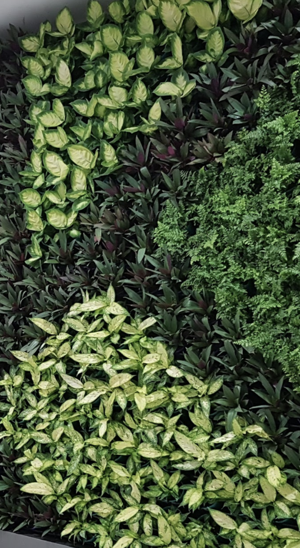 A vertical garden wall that can be practical for smaller spaces.